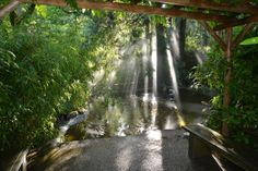 Early Morning Light.  #日本庭園 #japanesegarden #gardens #butchartgardens