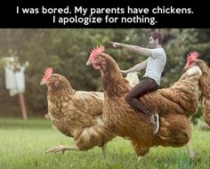 chicken, parents, funny pictures, funni, street art