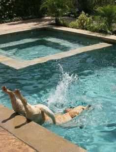 Majestic Dive! I'm laughing so hard!
