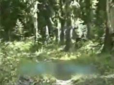 Bigfoot Caught On Tape?