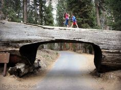 Visit three California national parks in three days via the Majestic Mountain Loop.