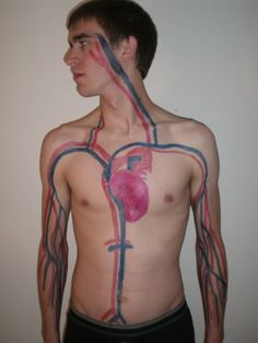 circulatory system projects | Circulatory System 2 Photo by jessmessart | Photobucket
