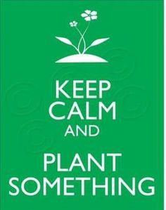 Plant something today!
