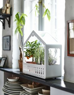 Save yourself some money and extra trips to the market, by growing your own fresh herbs at home. The IKEA PS 2014 greenhouse provides a good environment for seeds to sprout and plants to grow indoors.