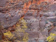tree against rock face - A tree losing its leaves in front of a tall rock face in Zion, USA.