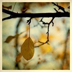 Alicia Bock Photography: daylight savings