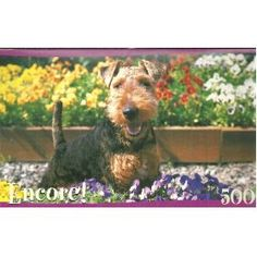 Encore Welsh Terrier 500 piece puzzle