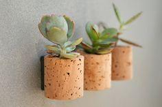 cork succulent magnets