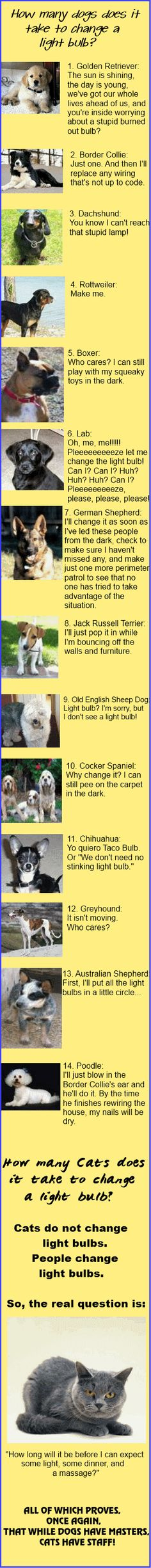 How many dogs does it take to change a light bulb?