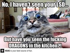 Fucking kitchen dragons! LSD kitty.