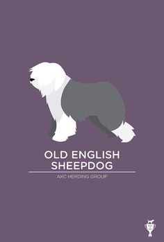 old english sheepdog   Tumblr
