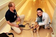 UCLA healing pets celebrate 20 years - Westside People