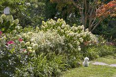 'Limelight' hydrangeas, Ivory Halo dogwoods, and daylilies soften the street side of the fence.   Photo: John Gruen