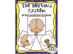 Human Body Nervous System: Interactive Brain Scienstructable Ineractive Notebook Activity #gettingnerdy #INB