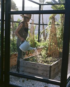 Tending a garden in the Hollywood Hills.  Photograph by Brian Ferry