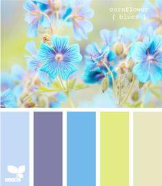 cornflower blues