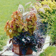 Easy, All-Foliage Container Garden Recipes