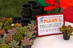 Plant a Succulent | Pretty Prudent
