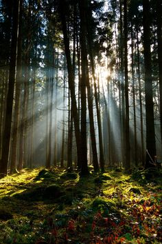 I love the soft light streaming through the trees.