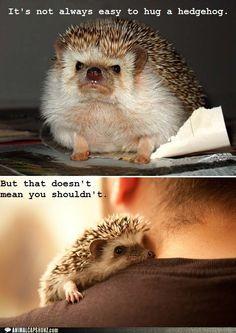 Hedgehogs need hugs too