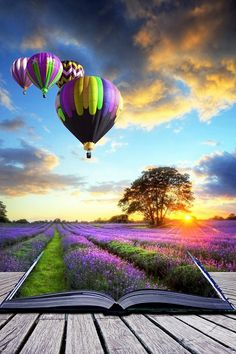 Hot Air Balloon Lavender Fields