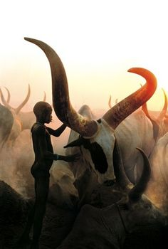 Dinka child and livestock