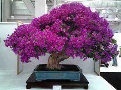 Gorgeous purple bonsai tree