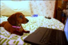 Set Up Your Own Puppy Cam in 6 Steps