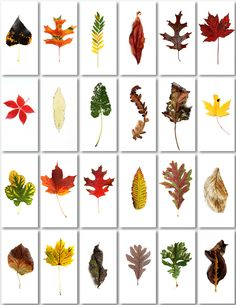 an autumn to remember (mary jo hoffman)