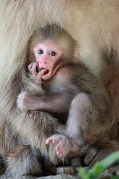 Baby #Monkey