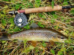#trout #flyfishing