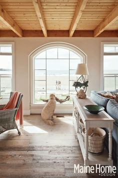 Cottage Classic at the beach - that is one happy dog with his driftwood!