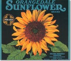 Antique Vintage Art Fruit Crate Label - 027 - Orangedale Sunflower Brand
