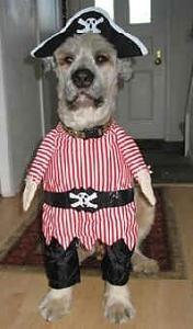 disfraces de halloween para perros-piratedog.jpg