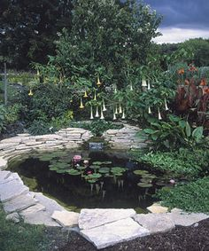 Planning Your First Water Garden