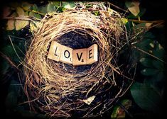 Love Nest! This is such a cute little  photo, would be a great valentines gift