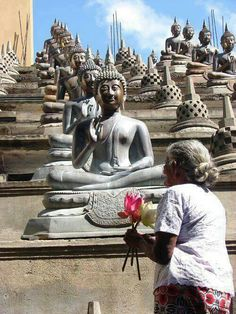 lotus flower offering for Buddha