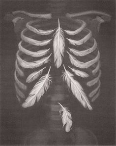 Feathers ribcage
