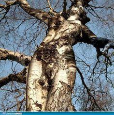 Femininity of Nature