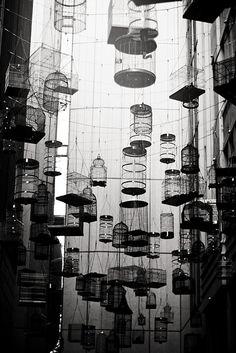cage bird caged {Explored} | Flickr - Photo Sharing!