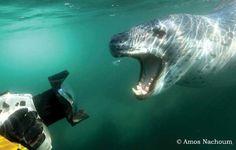 Sea Lion meets camera