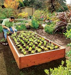 Raised Beds < Backyard Produce Department | MyHomeIdeas.com