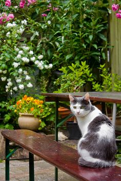Kat on a Bench in the Garden