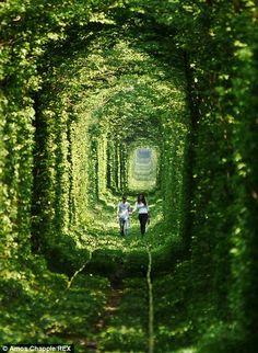 'Tunnel Of Love' private railway line in Klevan, Ukraine