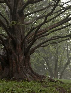 A very beautiful tree by Natasha__M on Flickr
