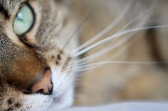 cats, pet photography, fans, pets, jade green