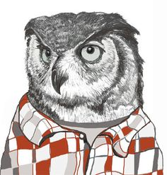owl in a flannel shirt