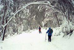 Silent, snowy ski run snowi ski