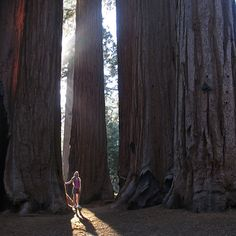 Sequoia National Park. The giant redwoods!