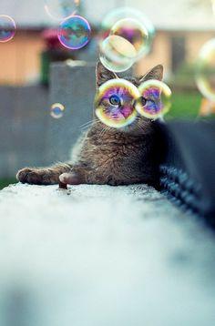 #bubbles #cat #photography